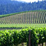 Enjoy wine in the redwoods at Anderson Valley Winery